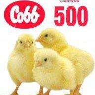 kobb500